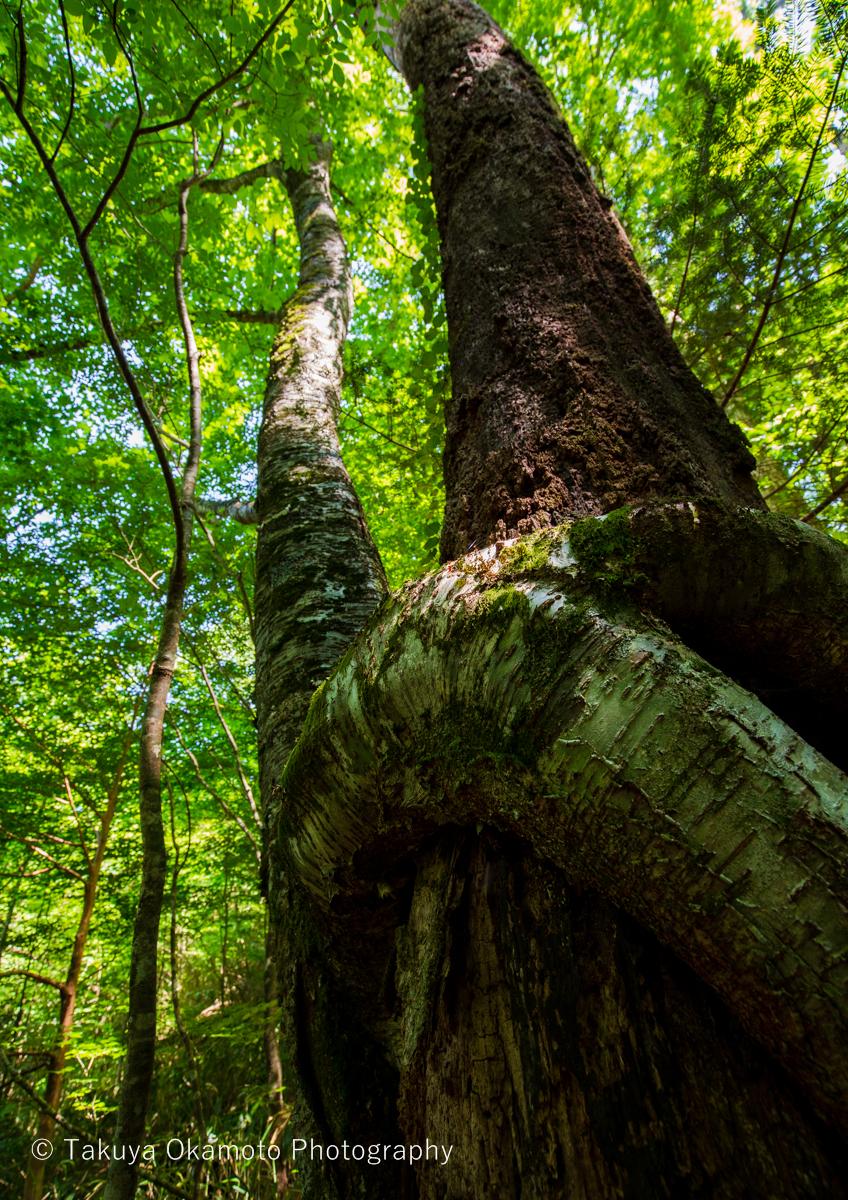 セクハラの木